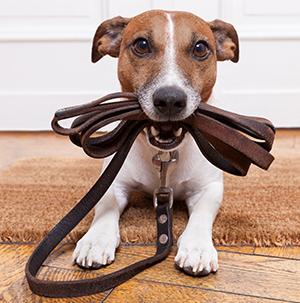 Help! My Dog ate my Passport!