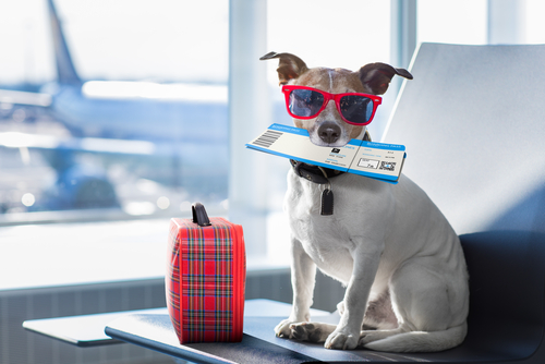 Rules for Pets While Traveling: A Guide About Traveling With Pets